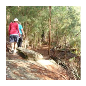 STEP Bushwalkers