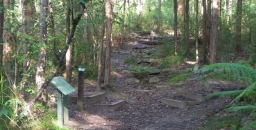 Introductory Bush Walks are Popular