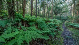Ten Years of Blue Gum High Forest Protection